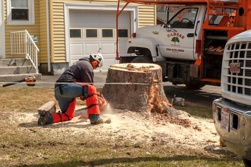 How To Get Rid Of A Tree Stump